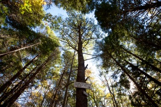Milton, Mass., Oct. 25, 2014: A sign marking Skyline trail is seen in the Blue Hills Reservation, an over 7,000-acre state park that includes parts of Milton, Quincy, Braintree, Canton, Randolph, and Dedham.