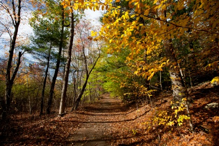 Milton, Mass., Oct. 25, 2014: Fall colors are seen on a trail in the Blue Hills Reservation, an over 7,000-acre state park that includes parts of Milton, Quincy, Braintree, Canton, Randolph, and Dedham.